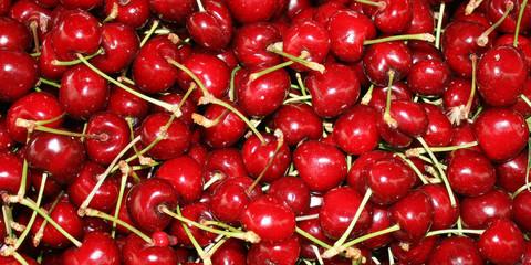 Berries ripe, red cherries.