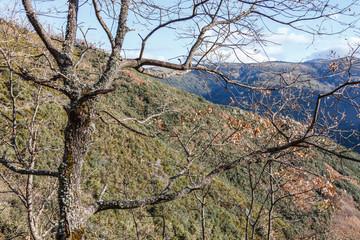 Roble y Montes Aquilianos. Senda de los Monjes. Valle del Silencio. El Bierzo, León, España.