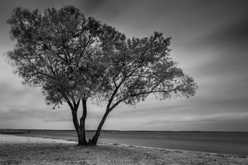 Landscape on the autumn coast. Stormy weather. Long exposure shot. Black and white photo.
