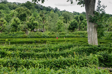 Green maze at garden of Schonbrunn. The famous tourist place