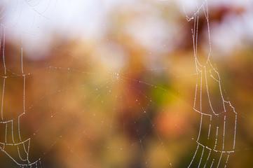 Spinnenetz im Herbst