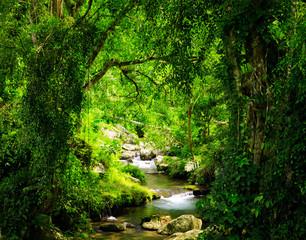 Stream flowing through dark forest