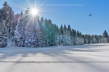 Winterlandschaft im Gegenlicht