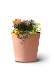 Blumen im Tontopf isoliert auf weißem Hintergrund