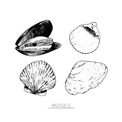 Vector hand drawn set of seafood icons. Isolated clams. Engraved art. Delicious marine food menu sketched objects.