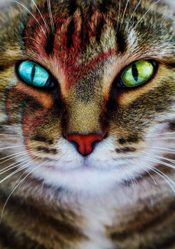 A creative portrait of a cat with a lightning bolt painted on its face.