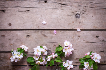 Spring border - apple tree flowers on  aged wooden background. S