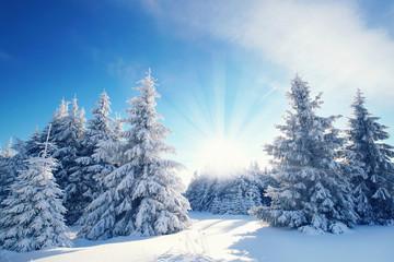 Winterzauber im Winterwald