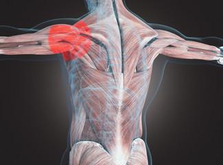 Uomo con dolore ai muscoli della spalla