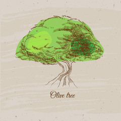 Vector sketch of olive tree. Vintage illustration with olive tree.