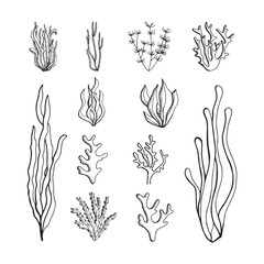 Seaweeds set of sketches. vector illustration