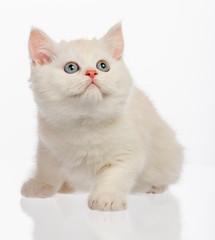 Cute little kitten on white