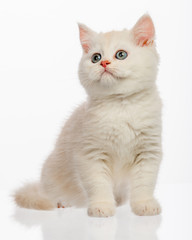 Cute little kitten on white