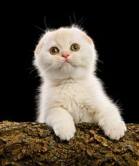 Cute little kitten on black