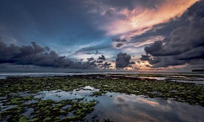 Seaweed ocean