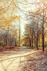 Colorful autumn landscape alley in the park in the fall sunny day.  Coloring and processing photo.