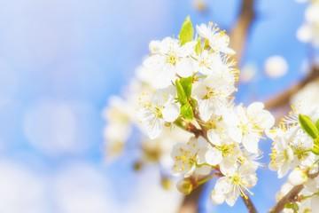 Wunderschöne Frühlingsblüten