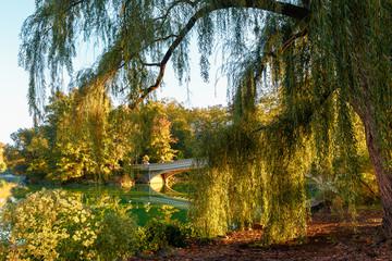Tuinposter Zwaan New York outdoors
