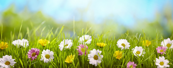 Spring flower in the meadow Wall mural