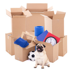 moving day concept - brown cardboard boxes and pug dog isolated