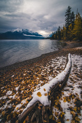 Fototapete - Autumn leaves on a lake coast covered by snow.