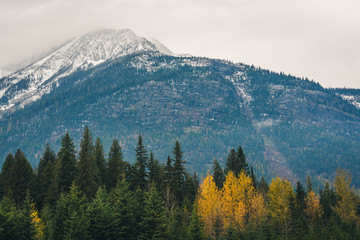 Wall Mural - Mountain surrounded by autumn forest.