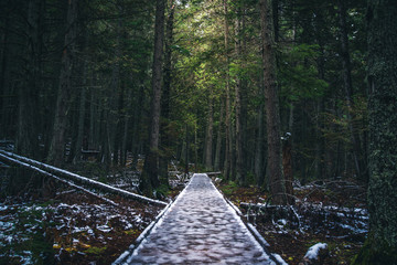 Wall Mural - Icy forest path.