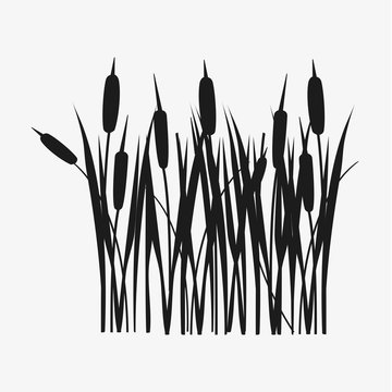 Reed grass black silhouette