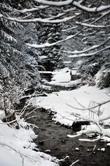 Winter landscape. Carpathians, Ukraine