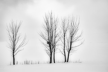 Three trees in the landscape