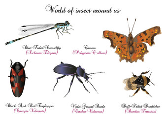World of insect around us