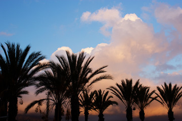 Palm trees against sky at sunset