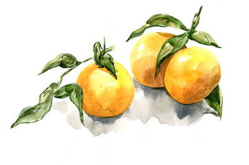 tangerine with leaves watercolor realism