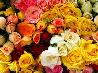 Bunch of colorful roses