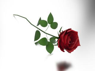 3D illustration red rose