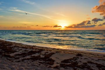 Garden Poster Cathedral Cove Sunrise @ Miami Beach