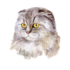 Watercolor close up portrait of popular British fold shorthair cat breed isolated on white background. Loop-eared rare silver chinchilla colouration highland. Hand drawn pet. card design. Clip art