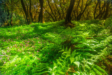 Fern in Garajonay national park