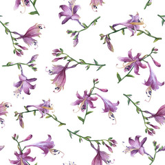 Seamless pattern with branch of purple hosta flower. Lilies. Hosta ventricosa minor, asparagaceae family. Hand drawn watercolor painting on white background.