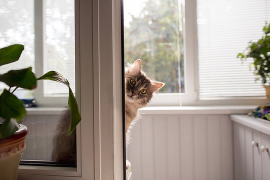 Cat at home
