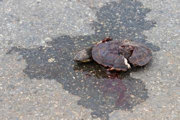 Turtles die because pedal cars.