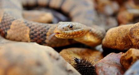 Wild Water snake