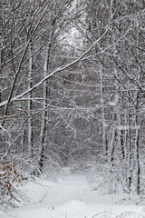 Winter forest with trees covered snow. Nature