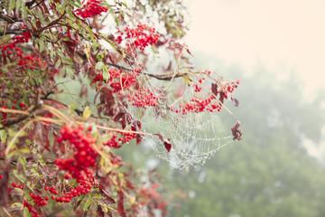 Autumn natural wallpaper, selective focus