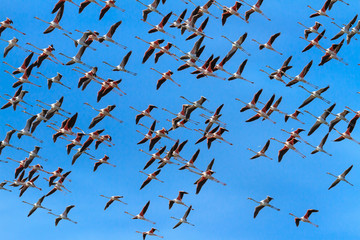 Flamingos on the sky in Almenara. Spain