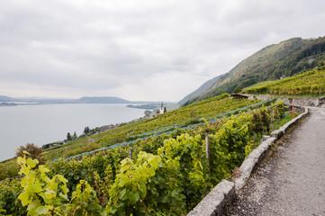 Ligerz, Dorf, Weindorf, Weinberg, Wanderweg, Rebenweg, Bielersee, See, Herbst, Herbstwanderung, Erntezeit, Schweiz