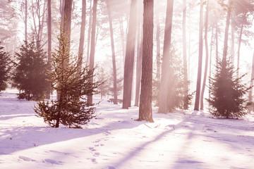 Winter cold forest, sunbeam through branch in park.