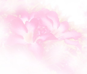 Blurred beautiful Impala Lily in soft color flower background