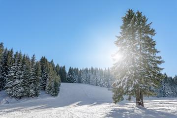 Schneelandschaft mit Gegenlicht