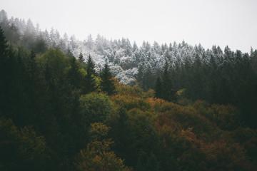 Fototapeten Wald Forest foliage in autumn
